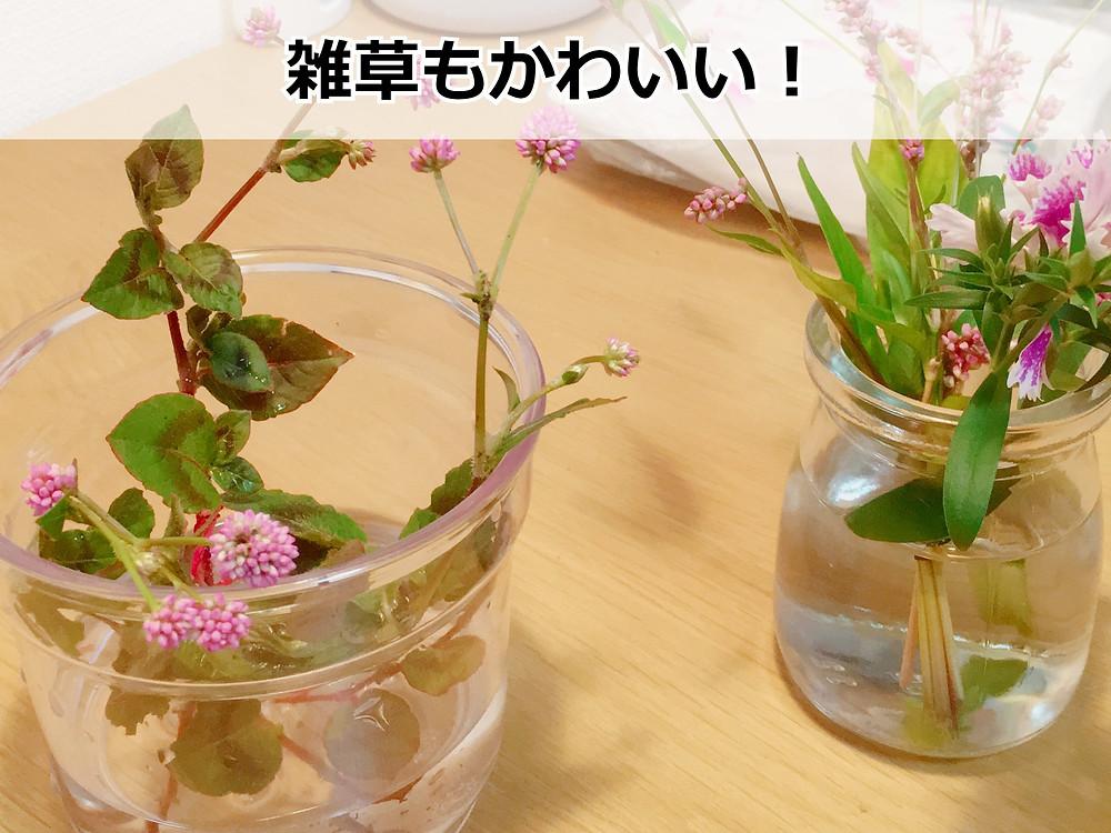 自然豊富な団地内で摘んだ草花を飾ってみた
