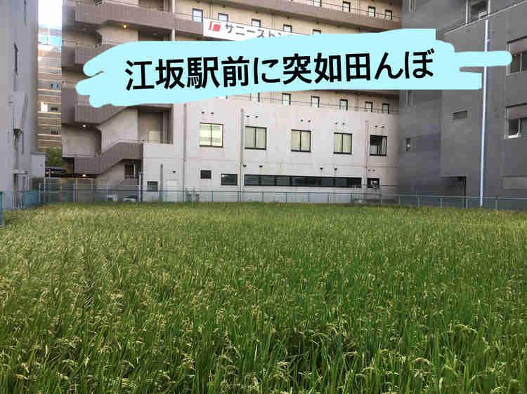 江坂駅すぐのビルの中に突如現れた田んぼ!
