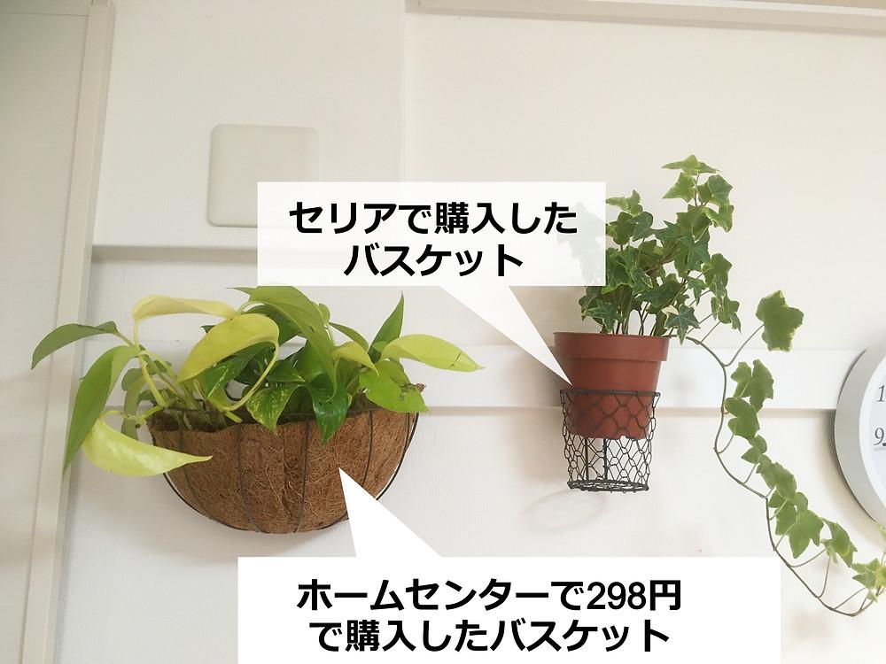 鴨居にワイヤーバスケットで観葉植物を設置