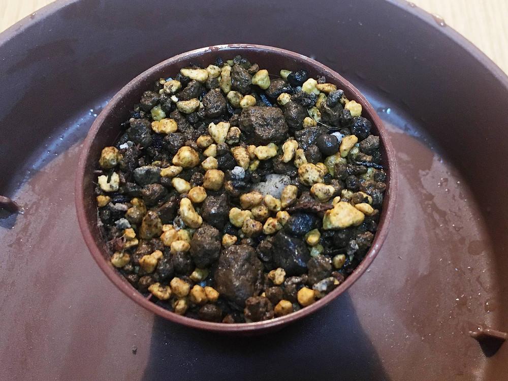 小さめの鉢に挿し木用土を入れます