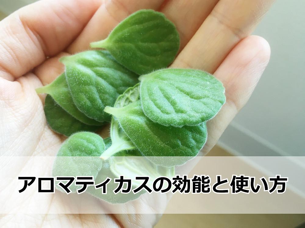 アロマティカスの葉