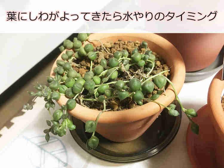 葉にしわがよってきたグリーンネックレス
