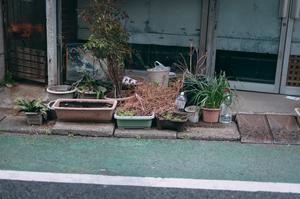 うっかり外に出しっぱなしにして枯れる植物たち