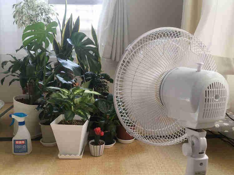 部屋中の植物を集めて扇風機を当てているところ