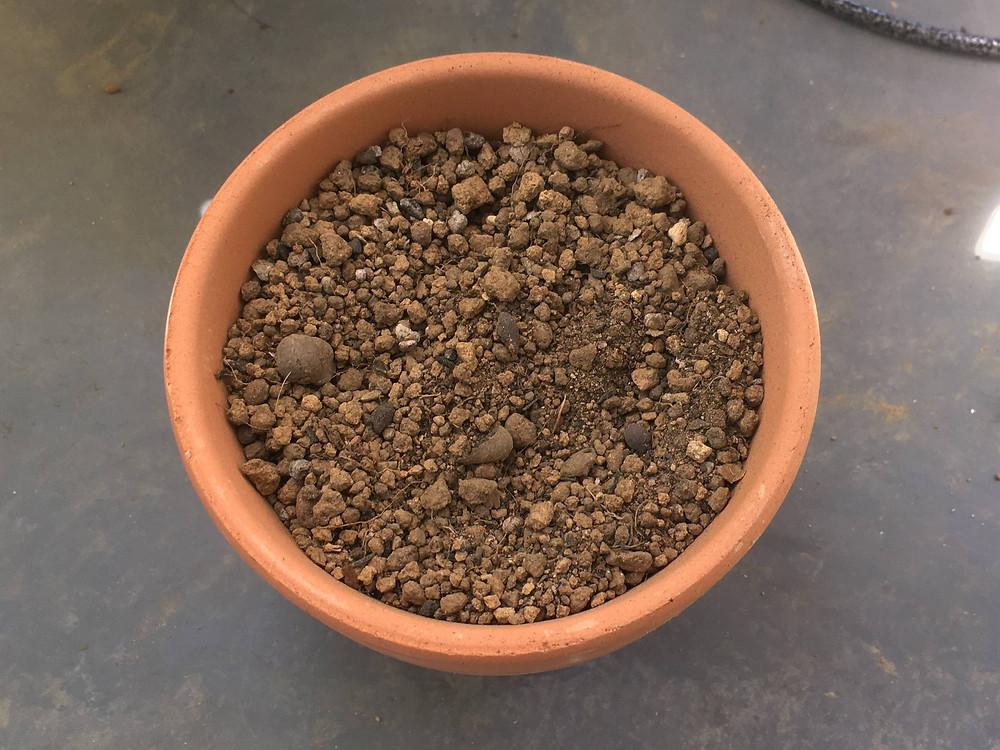 キンモクセイの挿し木に使用する赤玉土(小粒)