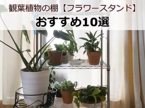 観葉植物の棚 室内をもっとおしゃれに!【おすすめ10選】