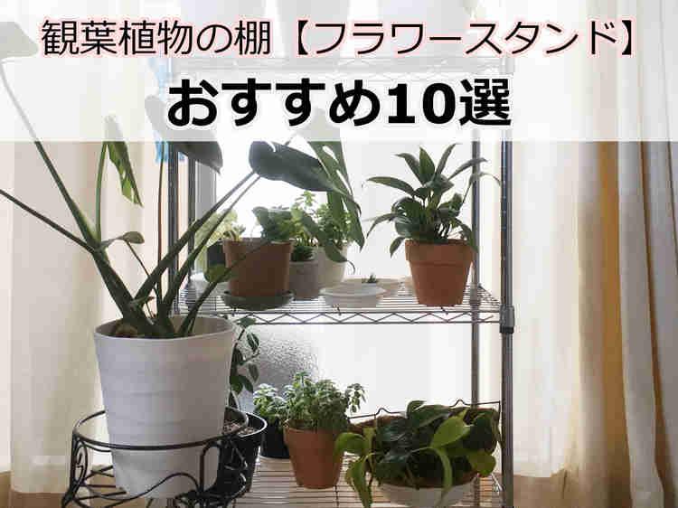 観葉植物の棚