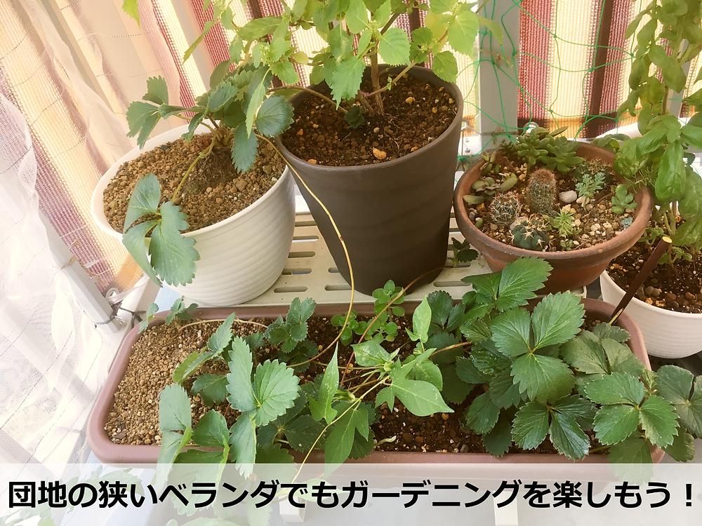 団地のベランダで大活躍している植物用のプラスチック棚!