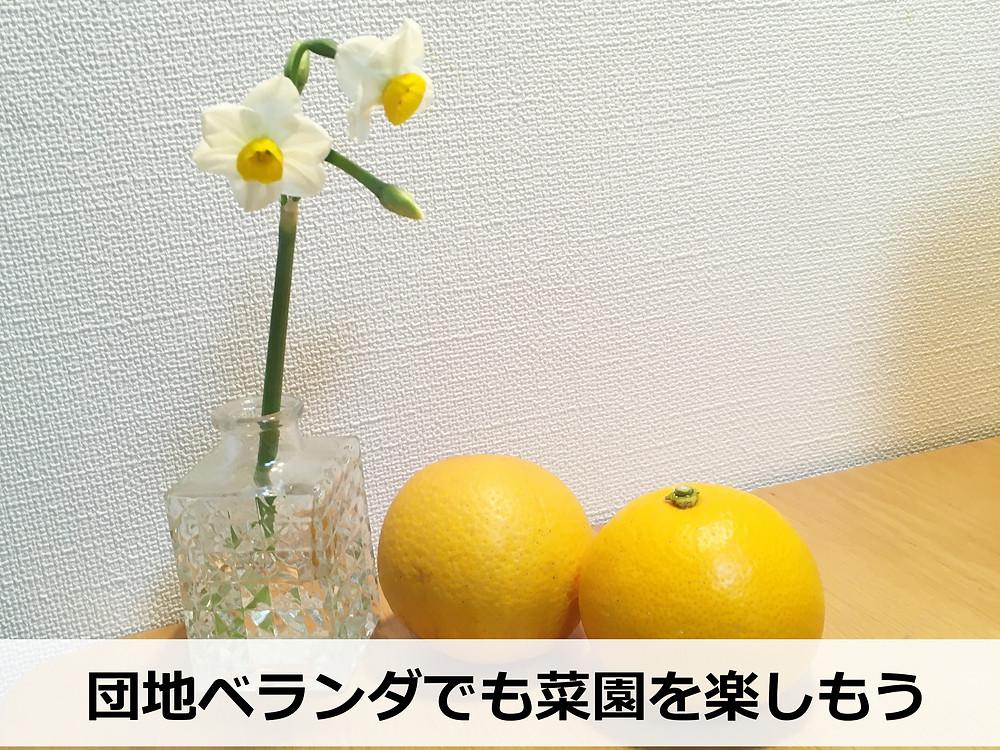 団地に咲いていた水仙の花を花瓶に