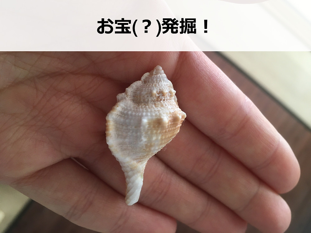 発掘された貝