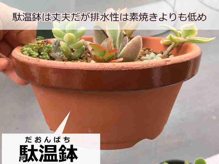 通気性に優れた素焼き鉢に植え付けた雅楽の舞