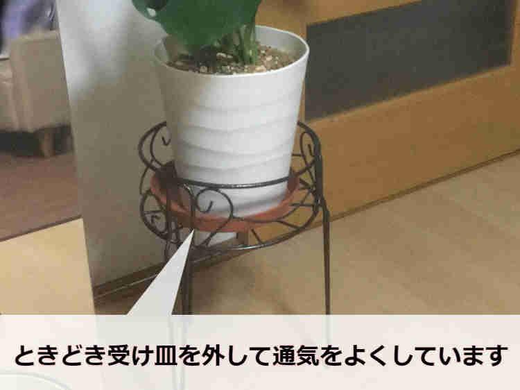 鉢スタンドに置いたモンステラ