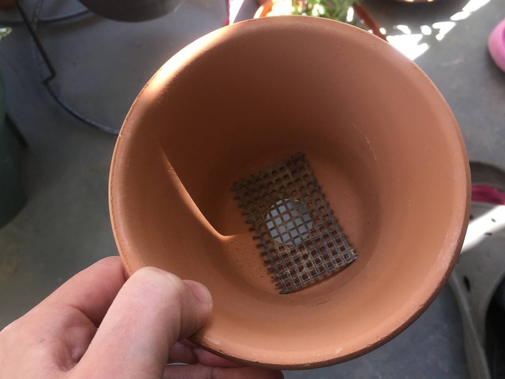 鉢底ネットを敷いた鉢植え
