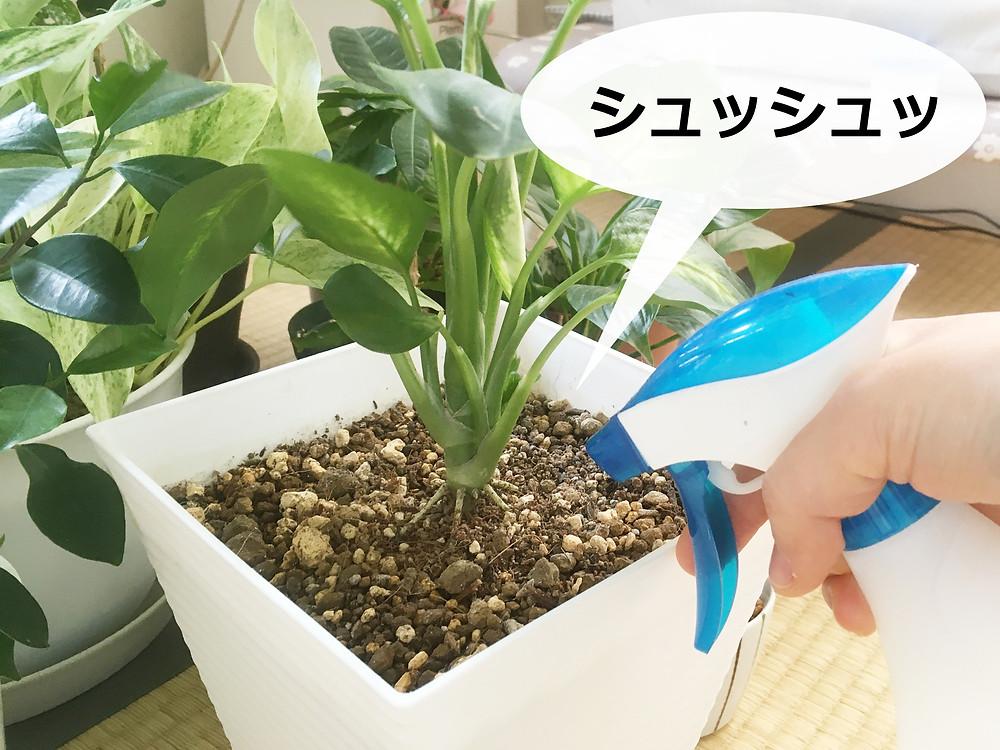植物への葉水は害虫予防にも効果的!