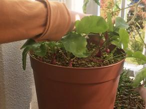 団地ブログ!ベランダでプチ家庭菜園~収穫~