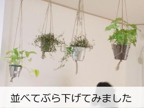 団地インテリア!100均グッズでグリーンをおしゃれに飾る方法