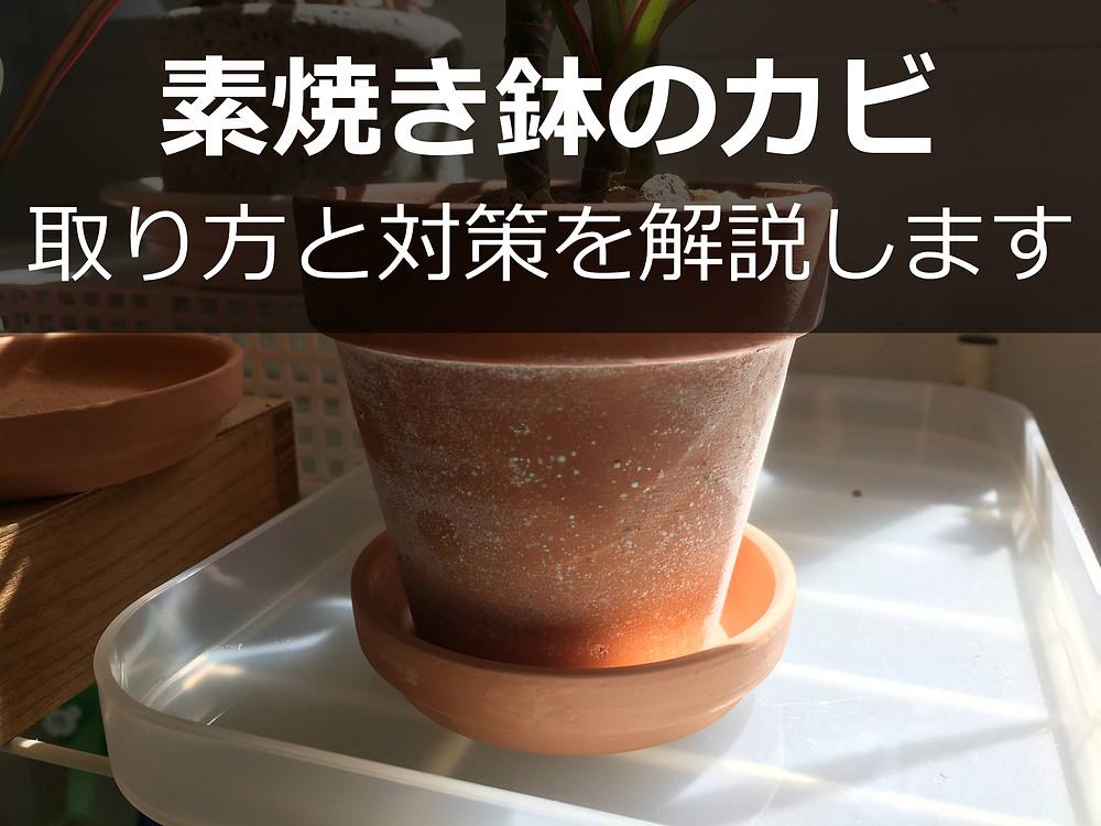 白カビの生えた素焼き鉢