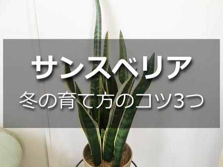 サンスベリア 冬の管理のコツ3つ【冬越しの方法とは?】