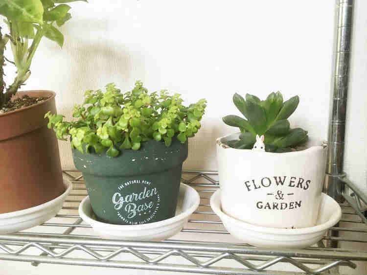 100均で購入したおしゃれな鉢植え