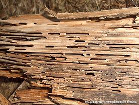 wood-home_2.jpg