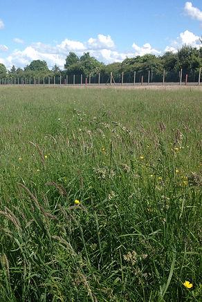 Wildflower Meadow - Germinal WFG20
