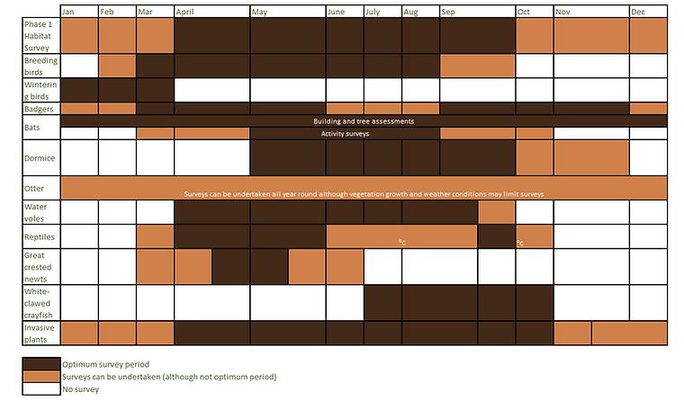 survey timetable.png