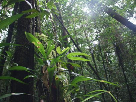 Matà Atlantica, Brésil. Les sons de la forêt tropicale.
