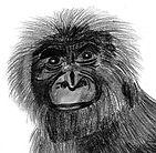 planche_7_bonobo_pice%C3%8C%C2%81peiche_