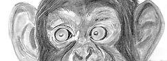 planche_16_chimpanze%CC%81_edited.jpg