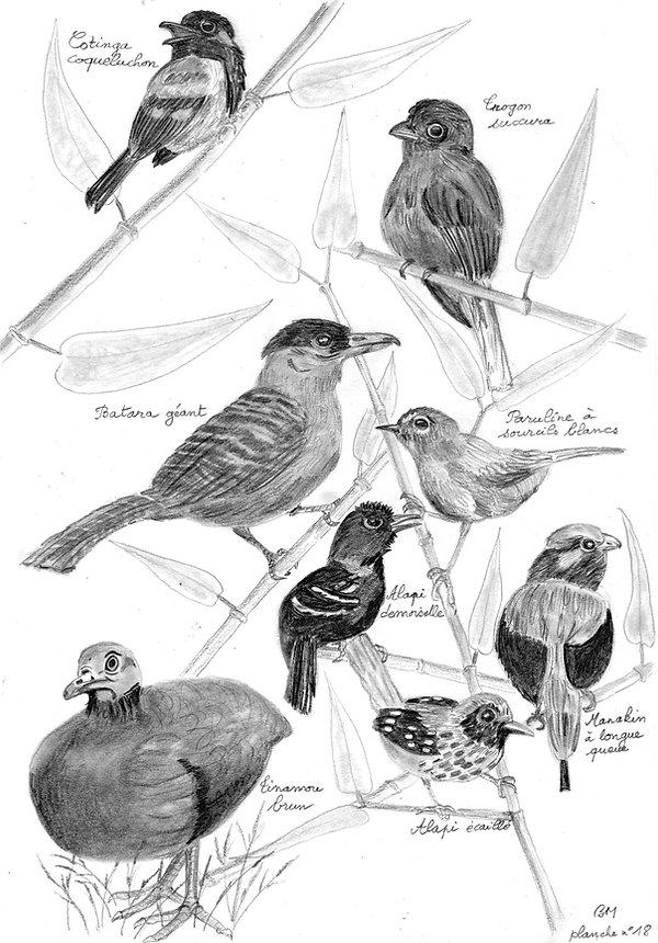 planche_18_oiseaux_forêt.jpg