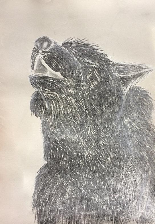 Zeichnung, Kohlezeichnung, Wolf, Kunst