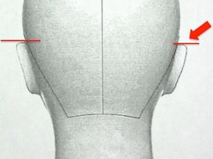 耳の位置の話