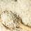 Thumbnail: Organic Basmati Rice (White)