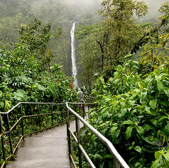 Lookout at Akaka Falls