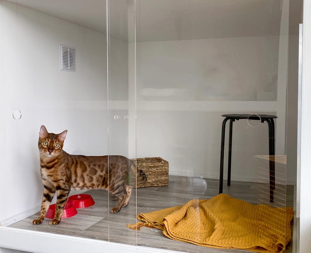 гостиница для кошек москва