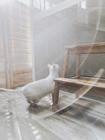 отель для кошек москва