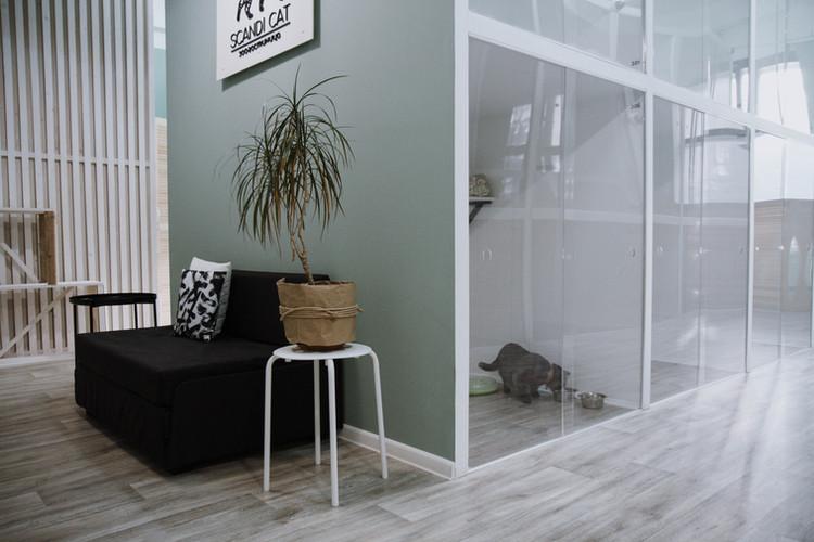 гостиница для кошек москва.jpg