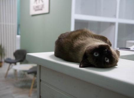 Режим дня в гостинице для кошек.