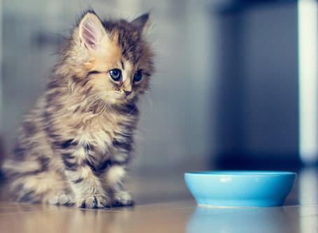 Натуральный рацион для котов