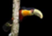 tucano_clipped_rev_1.png
