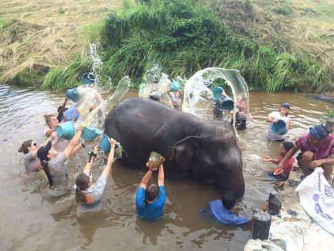 Bathing Elephant in Cambodia