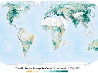 A terra está mais verde do que há 20 anos