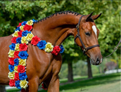 arab supreme - horse with flowers around