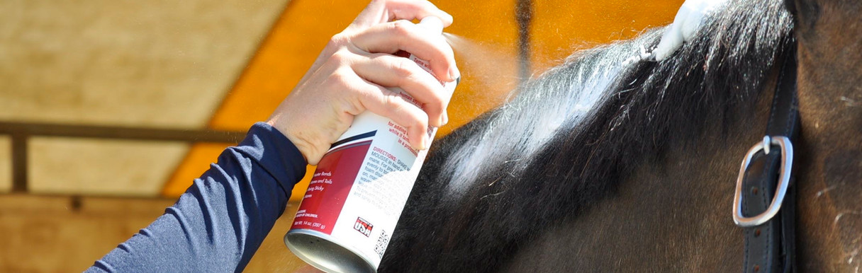 black mane groom.jpg