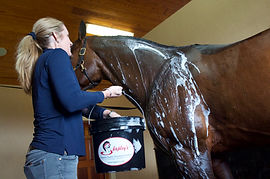 Woman black bucket horse wash.jpg