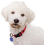White Dog Cut Out.png