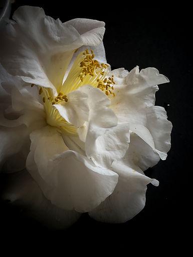 021321_Blooms_0167.jpg