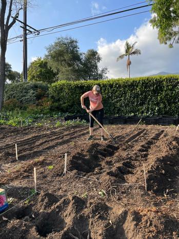 Jenette crushing the dahlia hole dig