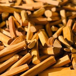 Popular Essential Oil Scents 🍀 : Sandelwood