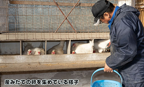 egg_04.jpg